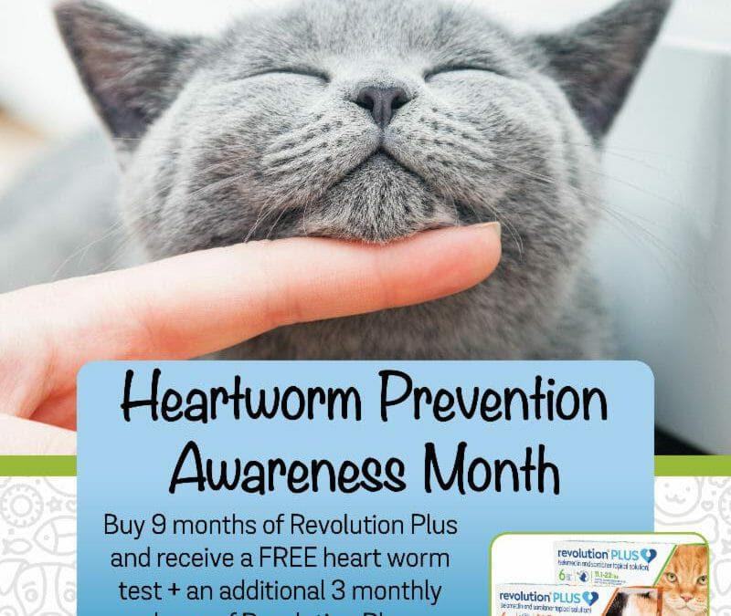 Heartworm Cat Prevention Special