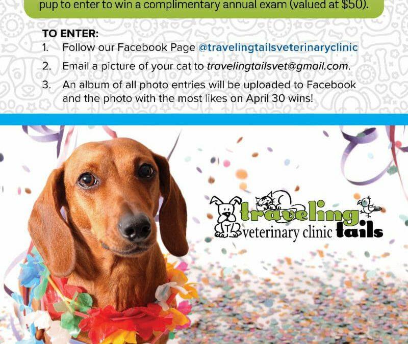 Viva Fiesta Pups Contest
